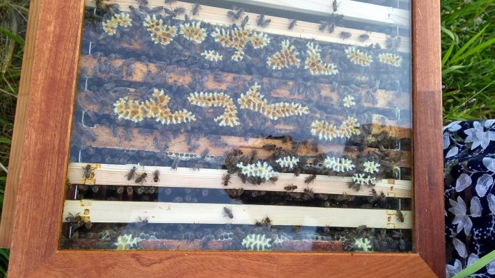 Bijen inwinteren