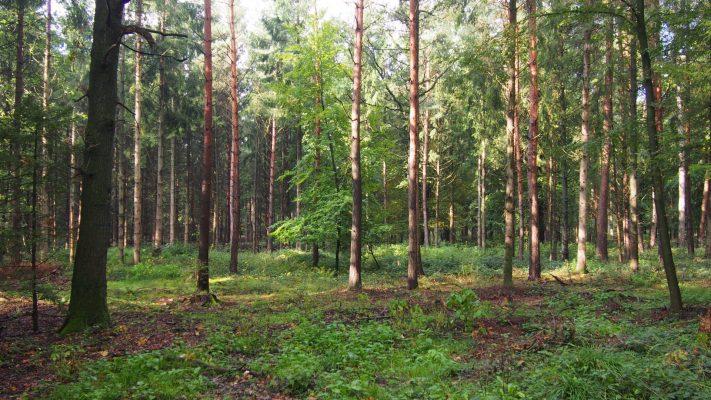 Bomenplan voedselbos