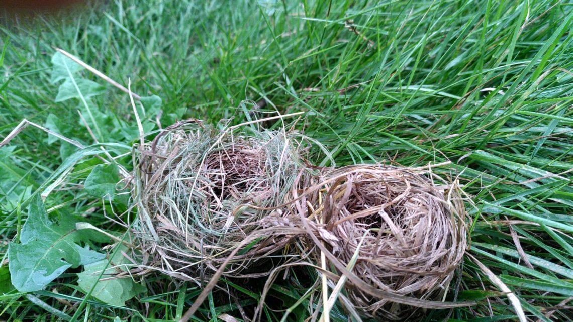 Nestjes in het riet
